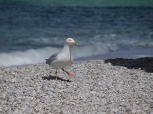 qi gong sur la plage