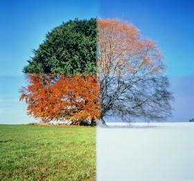 saisons-arbre